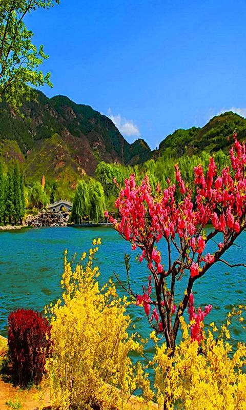 Colorful Spring