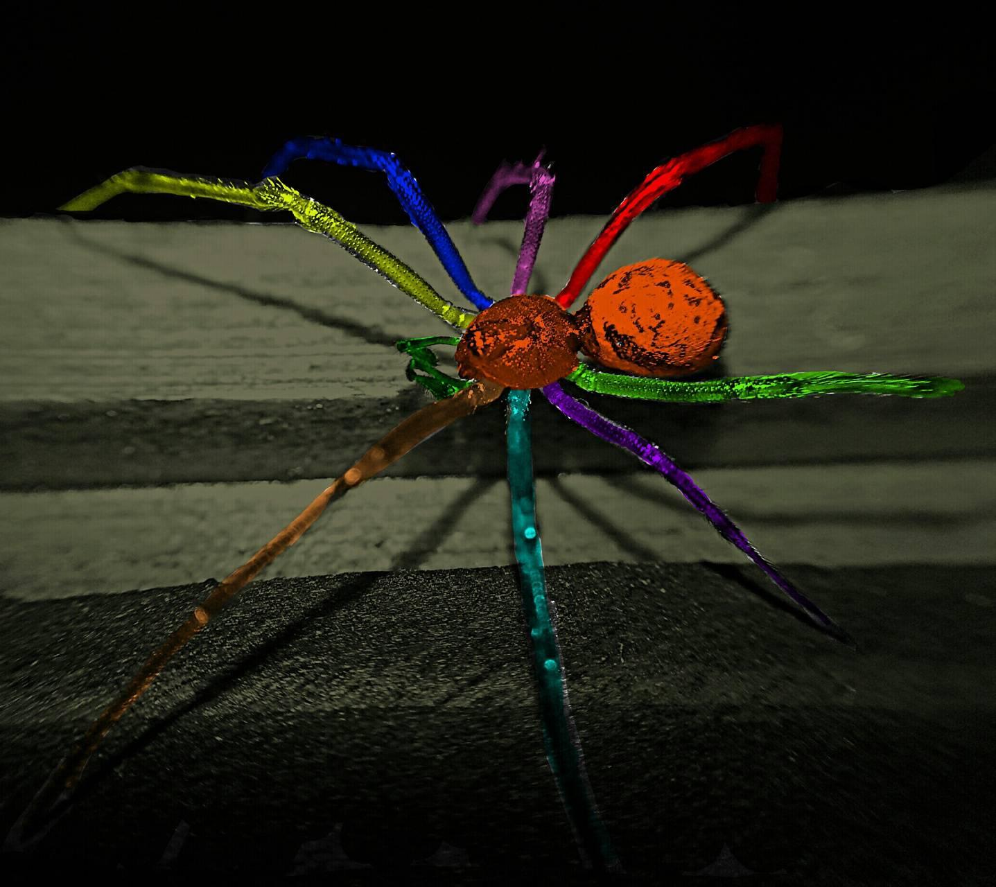 color splash spider