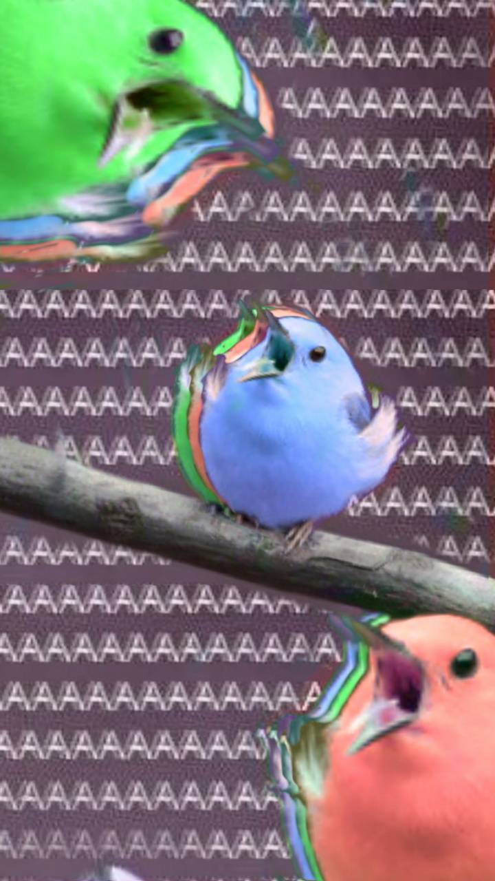 Screaming Birds