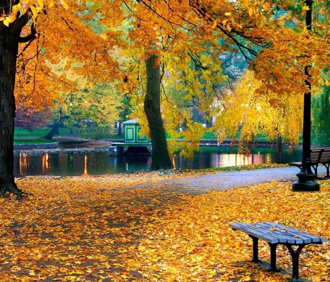 Fall Park