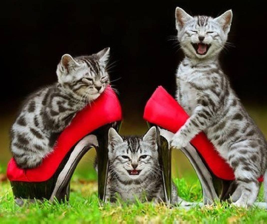 Fashions Kitties