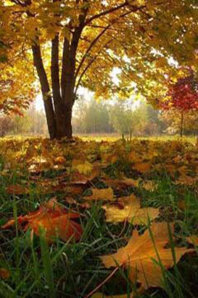 Best Autumn