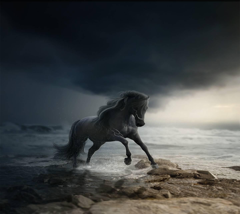 Wild Horse wallpaper by Venus_ - 86