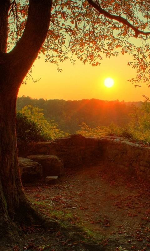 Sunny Autumn Hd