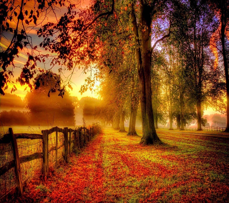 Autumn on Path