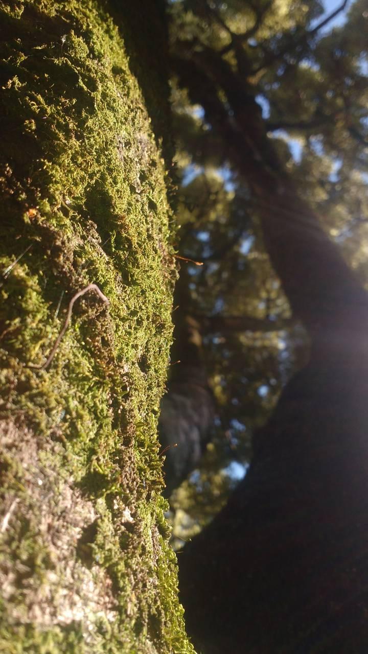 arbol tronco