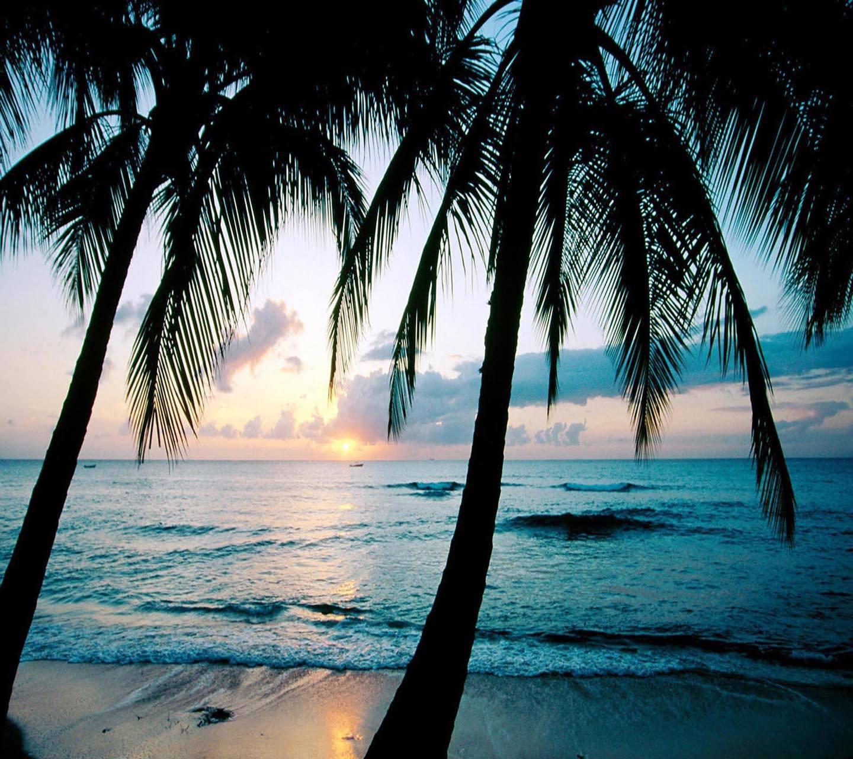Ocean Sunset Trees