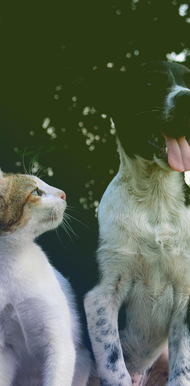 Curious Cat and Dog