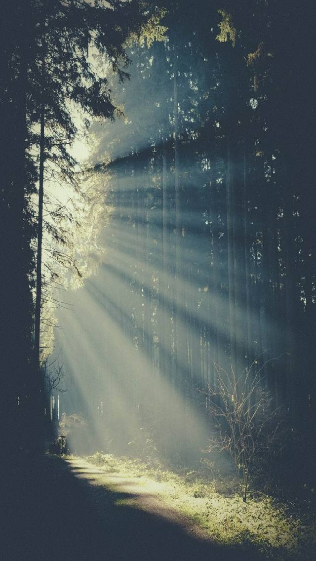gods rays in forest
