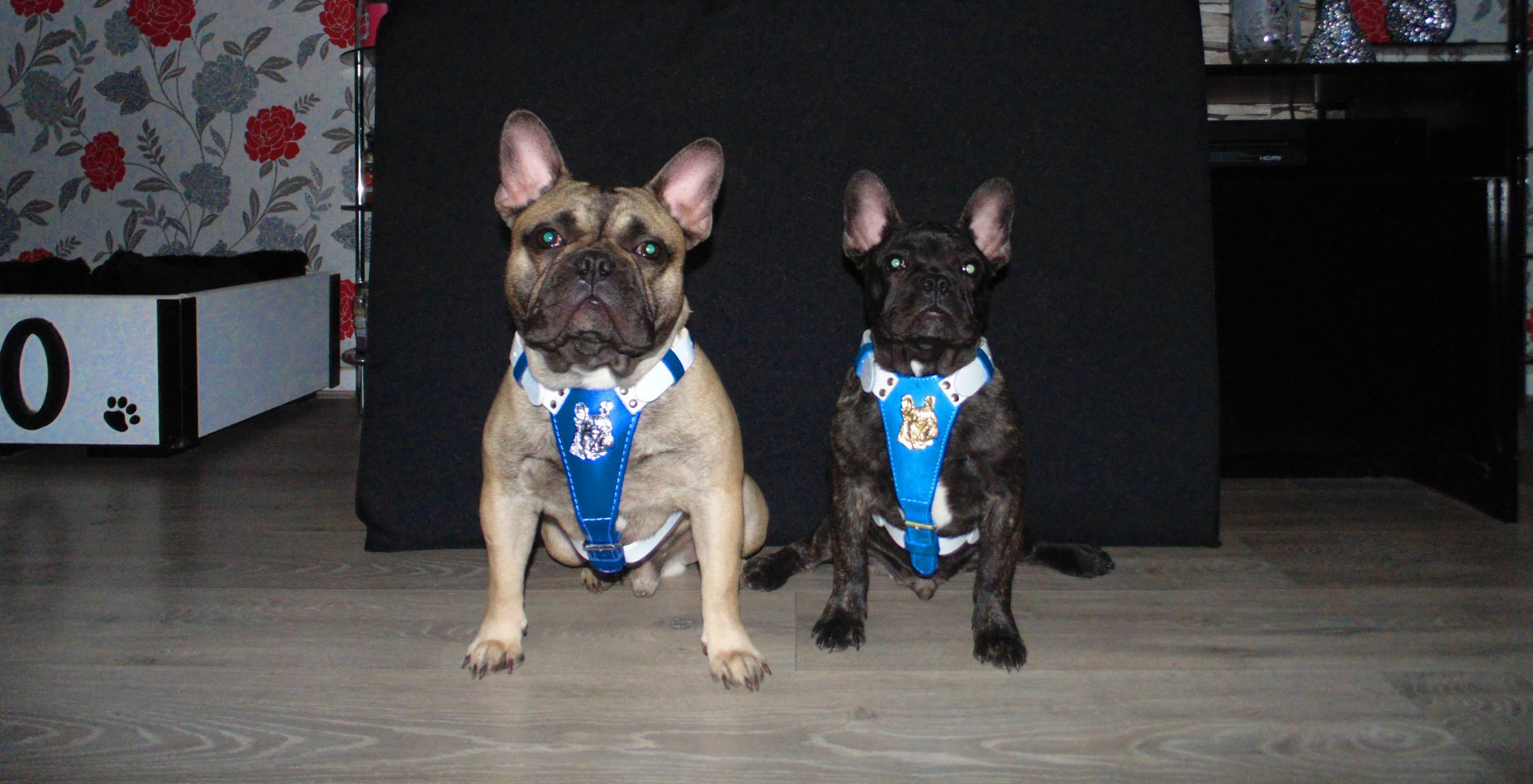 My frenchies