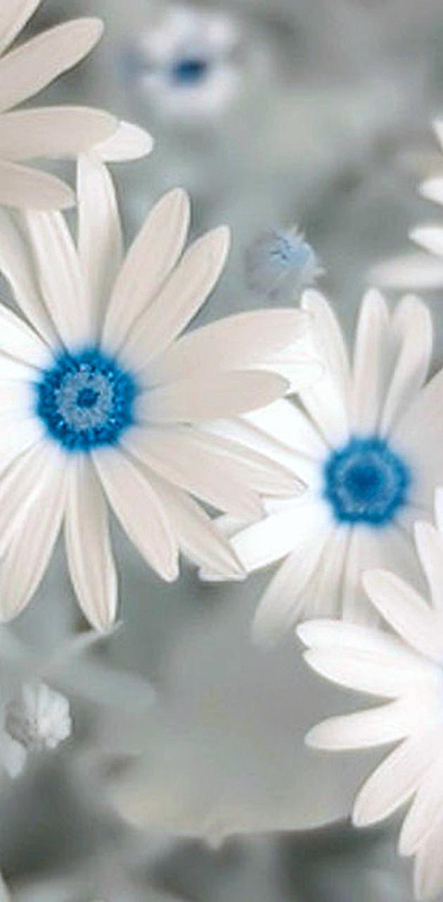 White Flowes