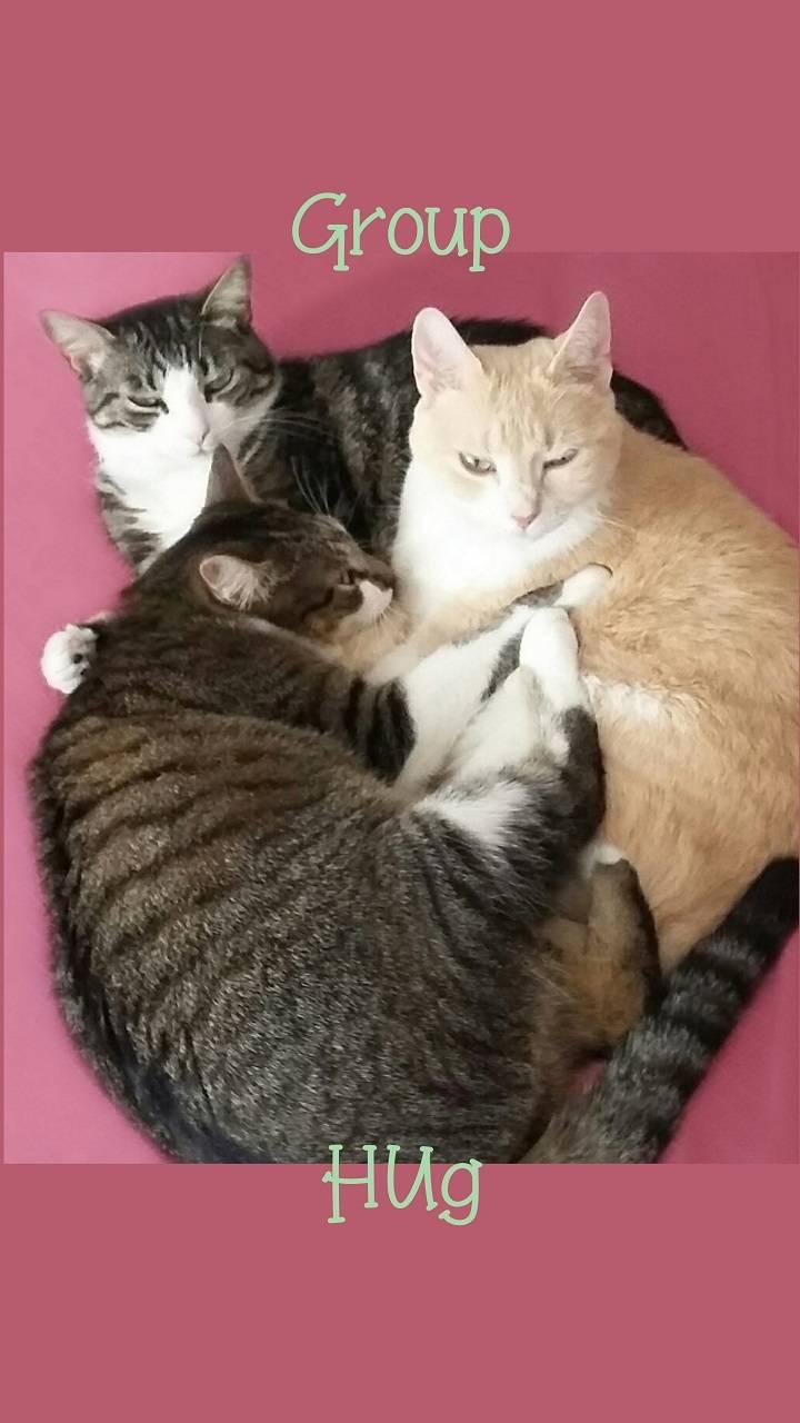 Group Hug Cats