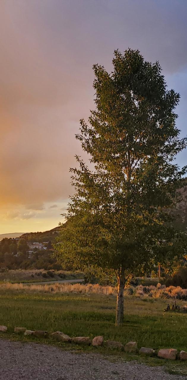 Sunnyset