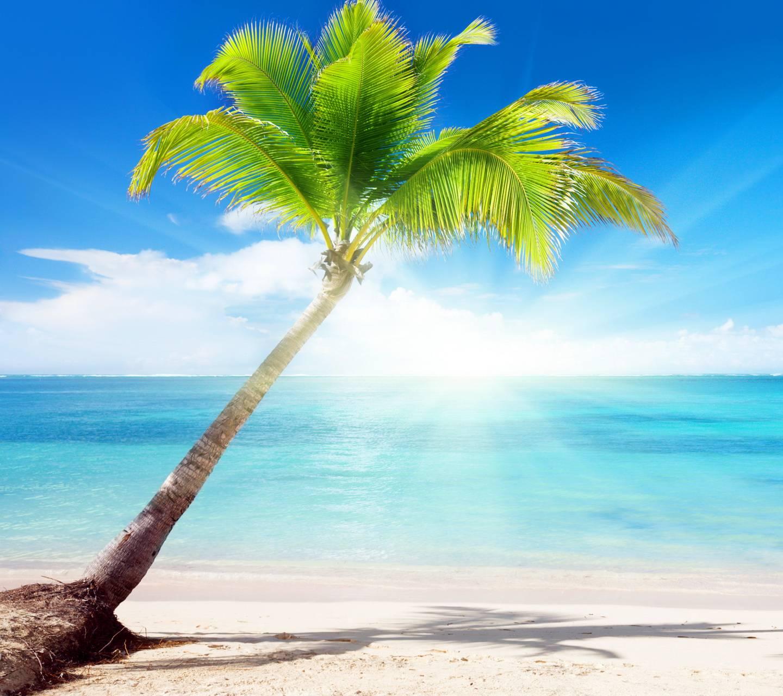 Sunshine Palm