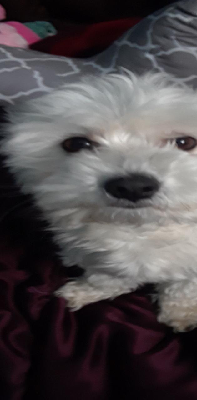 Th puppy