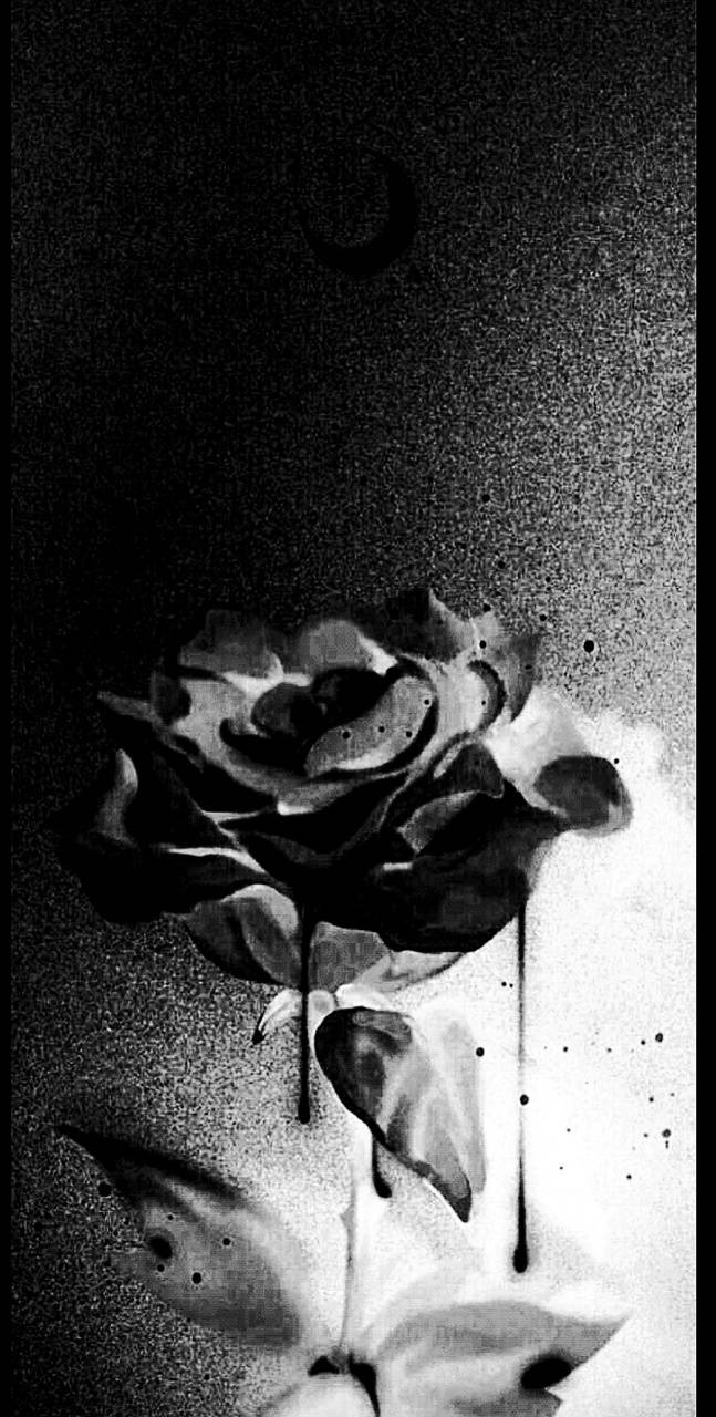 Contrasted rose