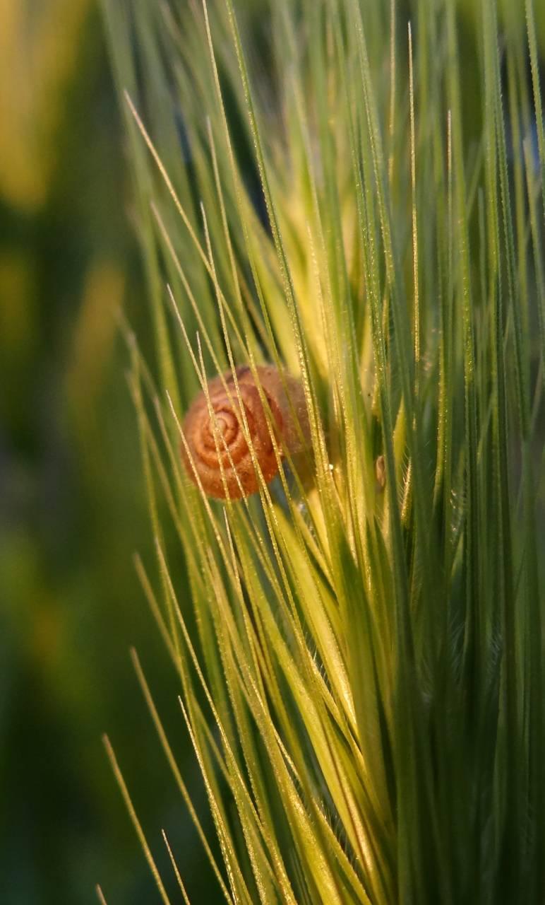 Snail Sunbathing