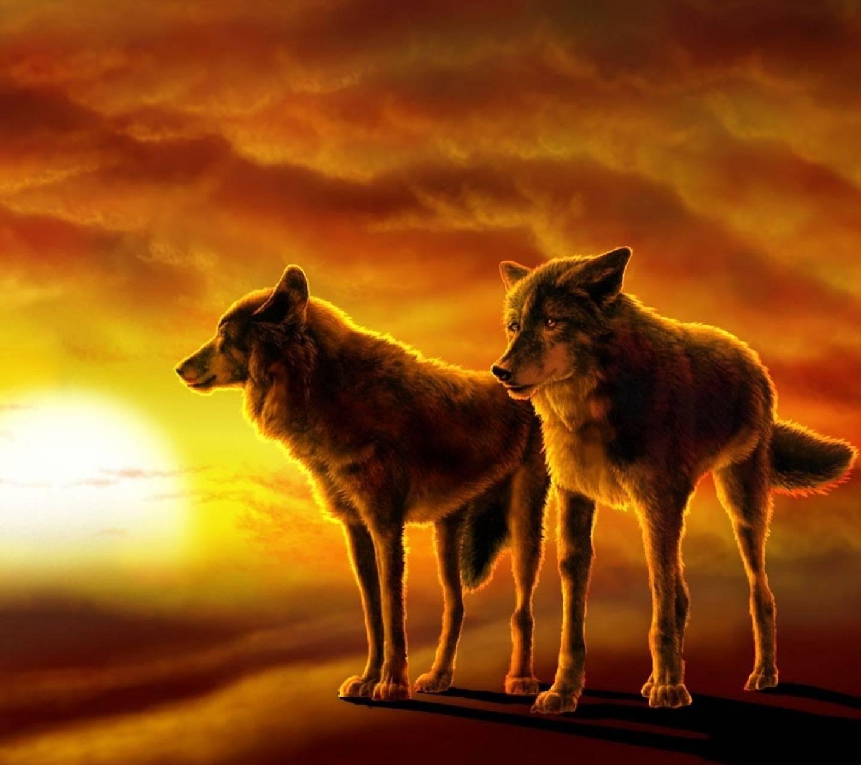 Sunset Wolves