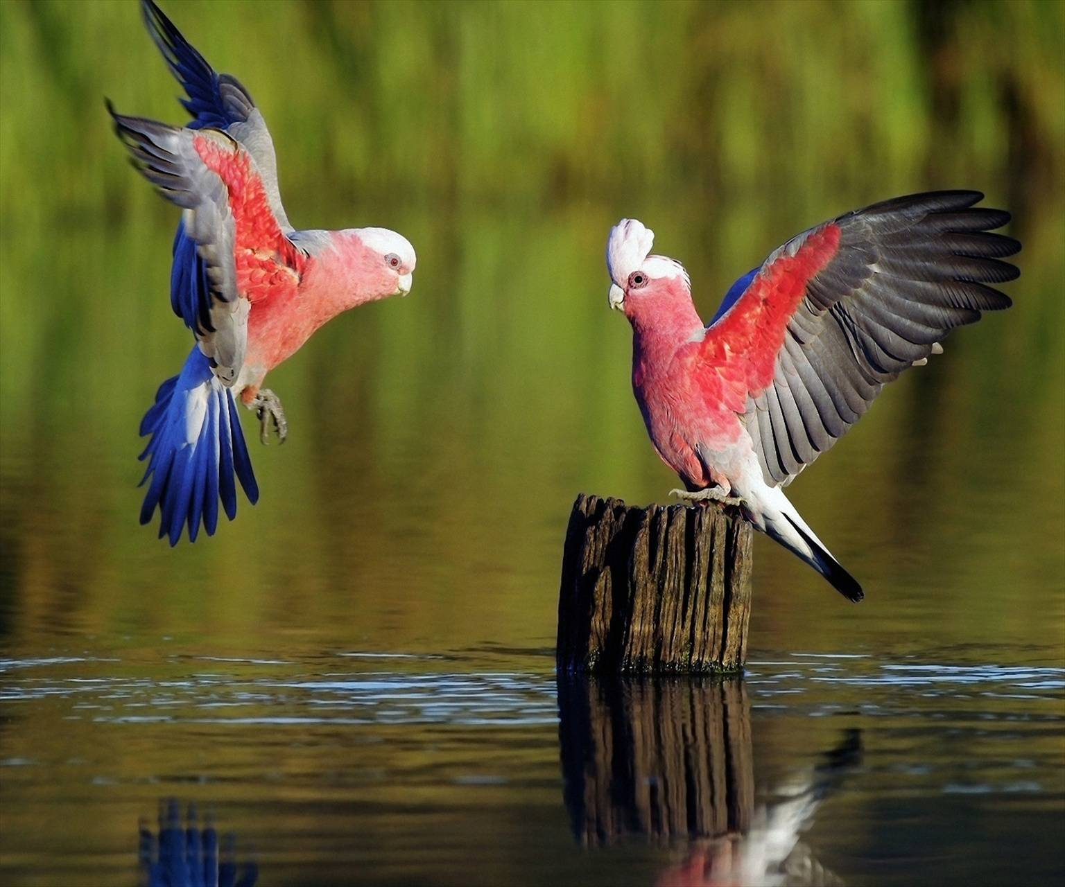 Birds Hd