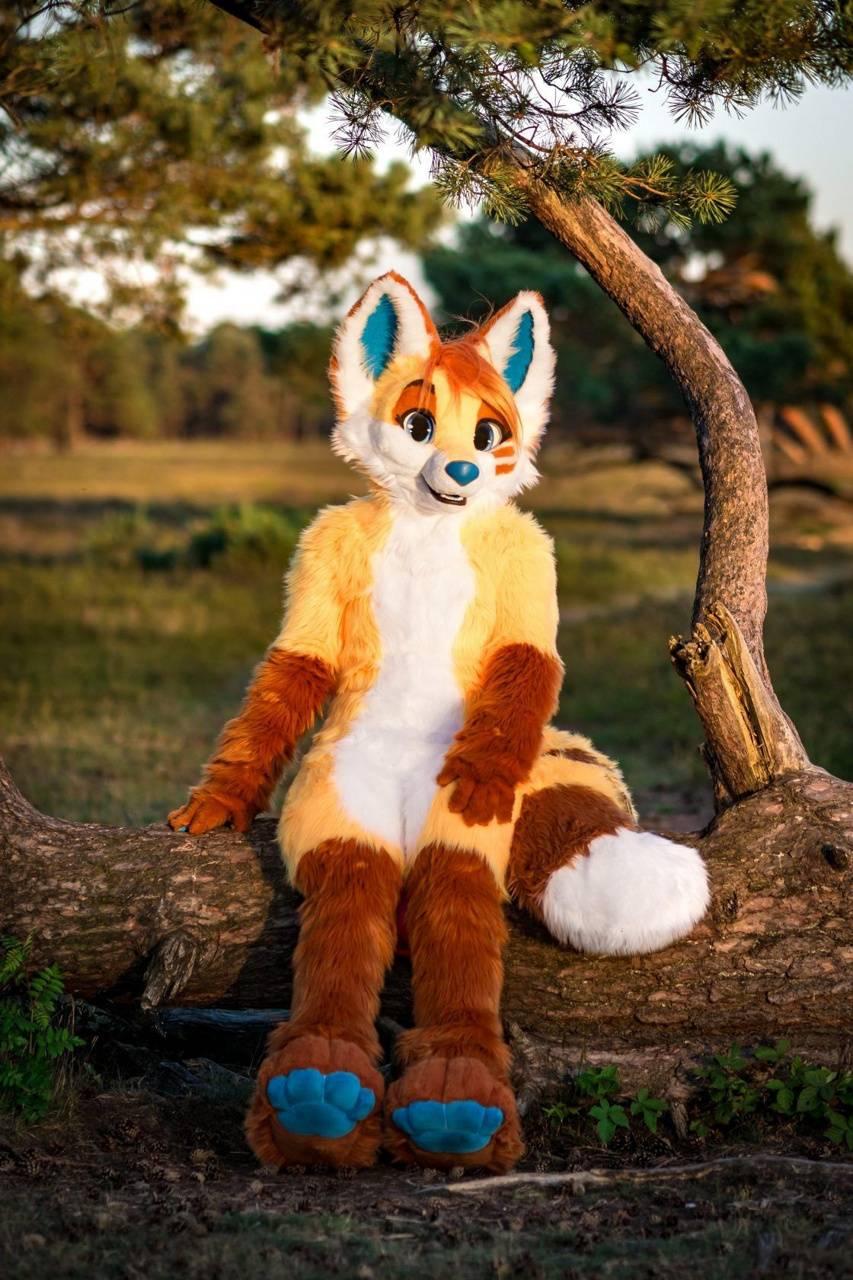 fuzzer fox