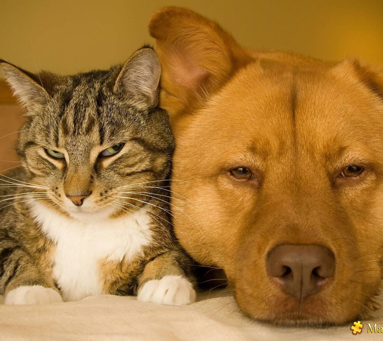 Rustic pets