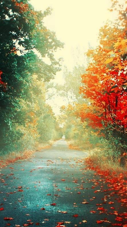 Nature Camino Colors