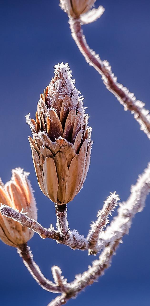 branch winter
