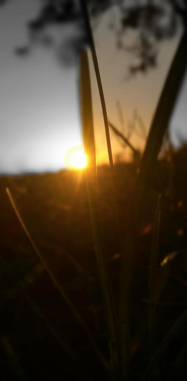 Creative Sun