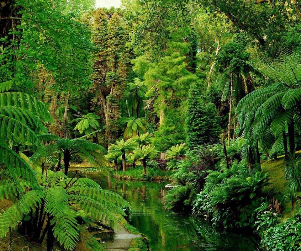 Garden green