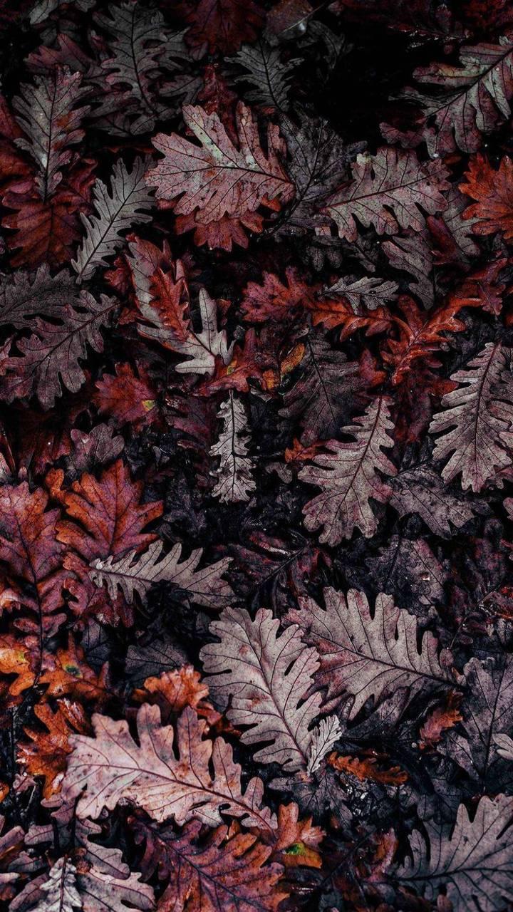 Dawn Leaves