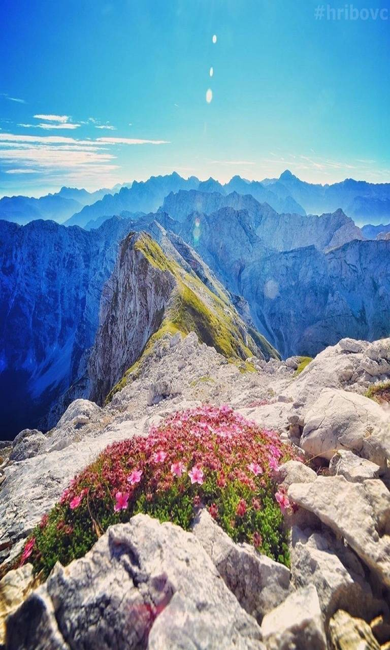 Mountain flowers wallpaper by tubar
