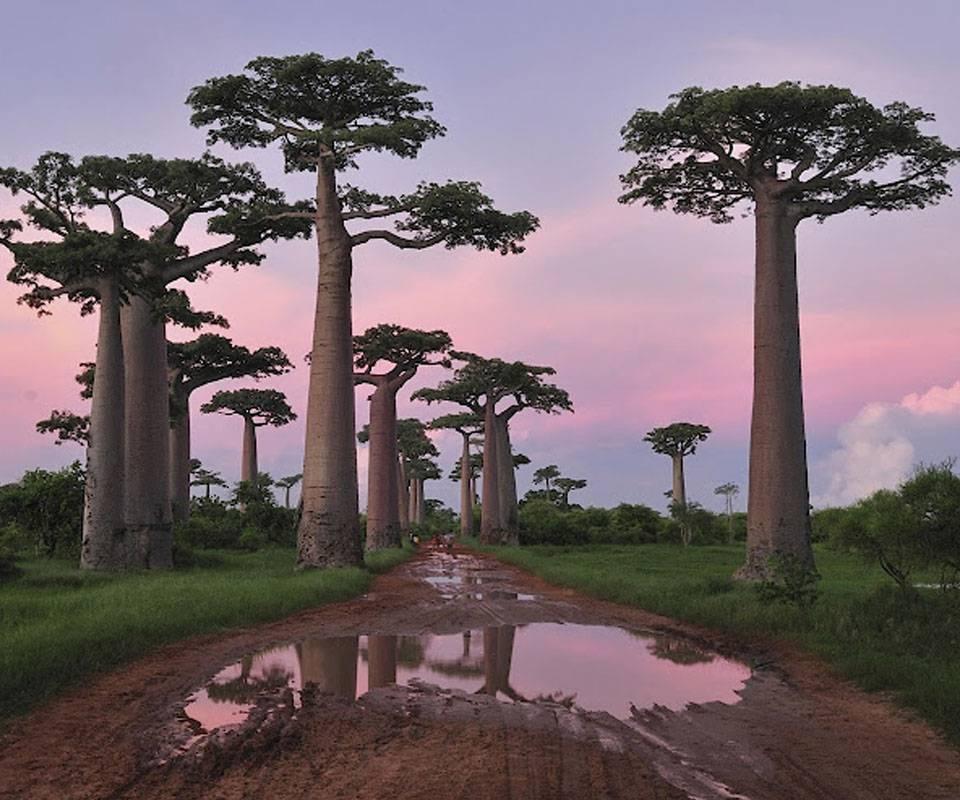 Madagascar Nature