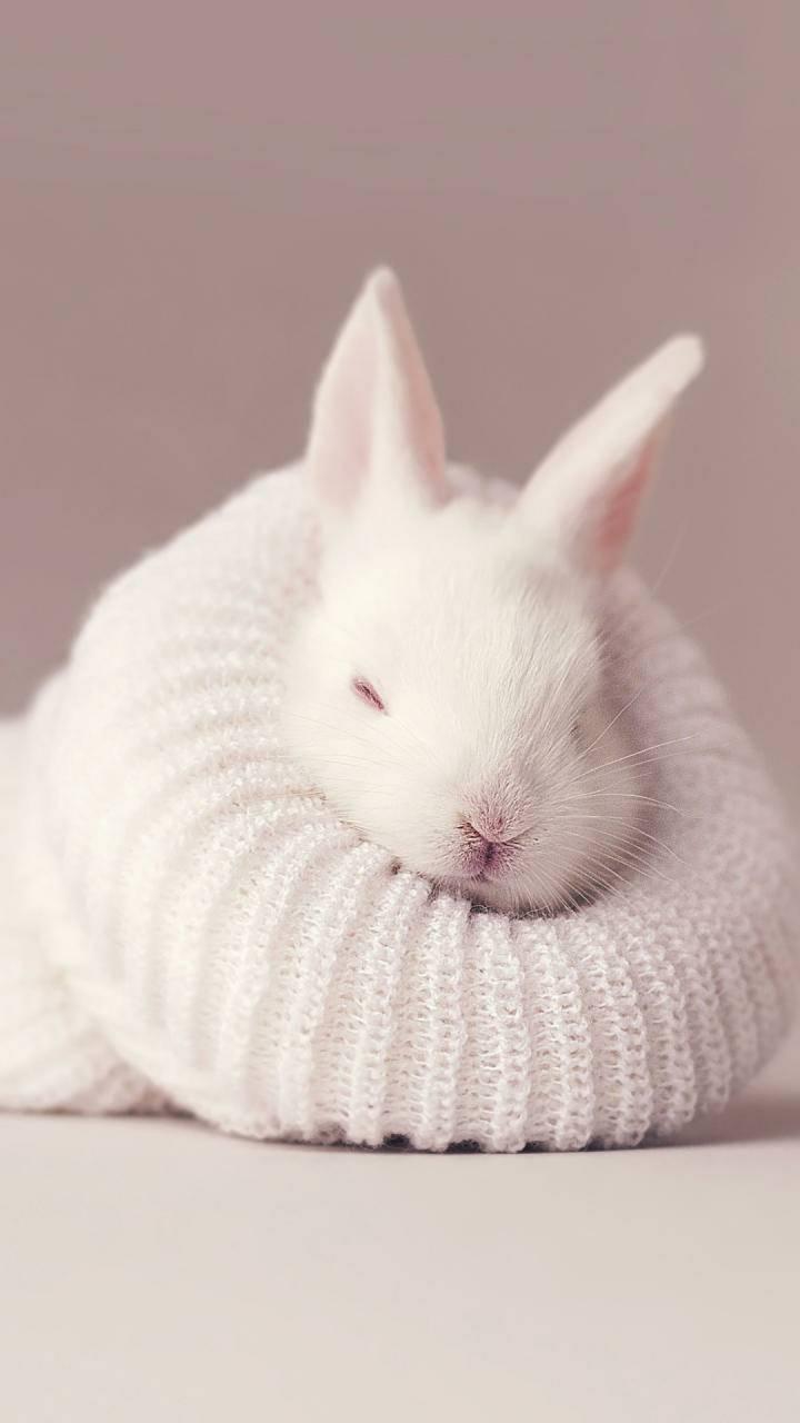 Cute Bunny Wallpaper By Samgandolf 27 Free On Zedge