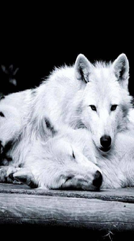 Loving Wolfs