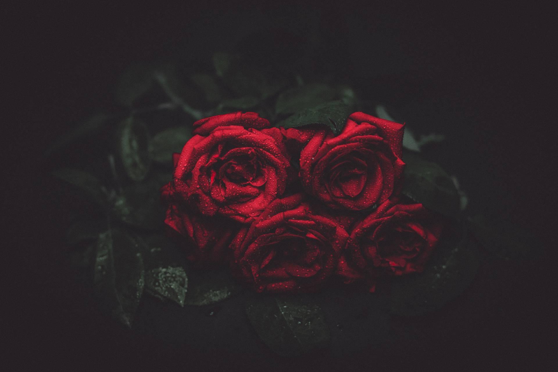Dramatic Roses