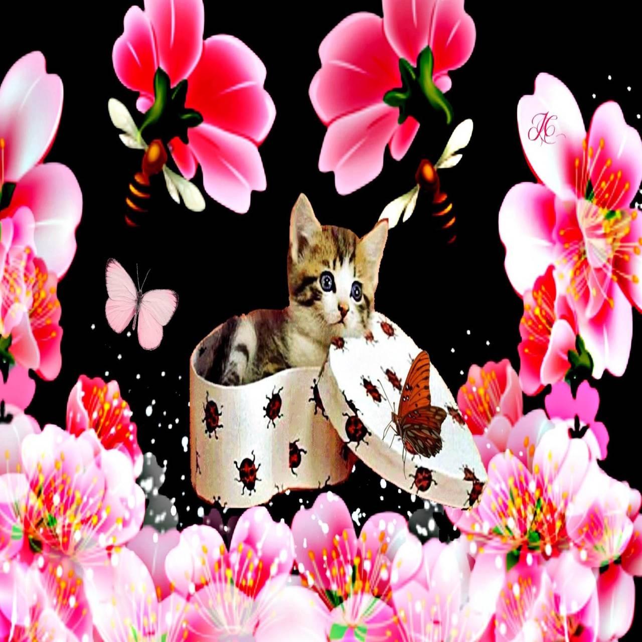 Gift box kitten