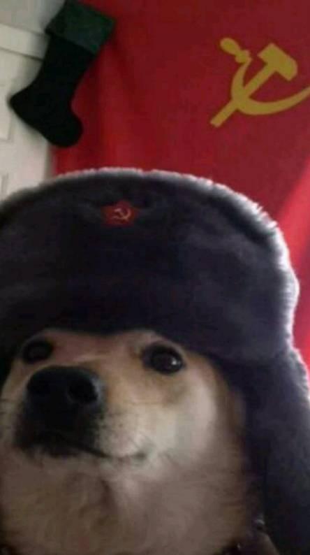Comrade Dog