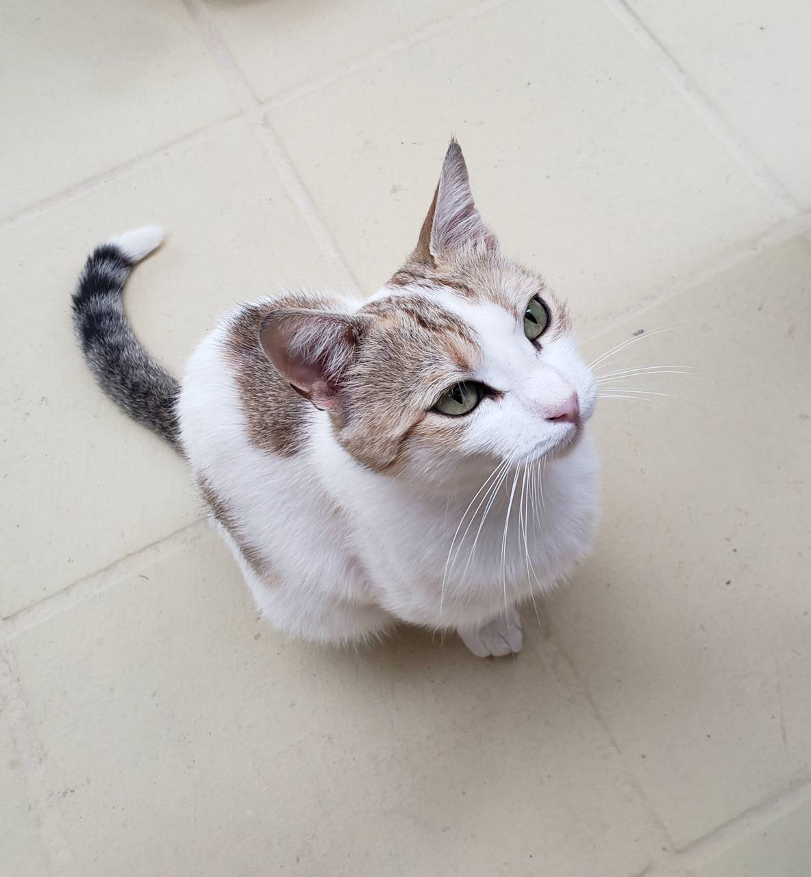 Stray Santorini cat