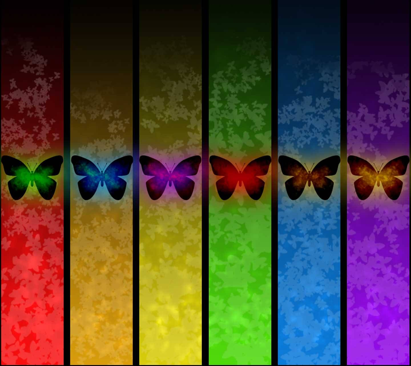 Colour Butterfly