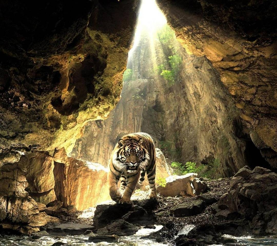 Tiger In A Cave