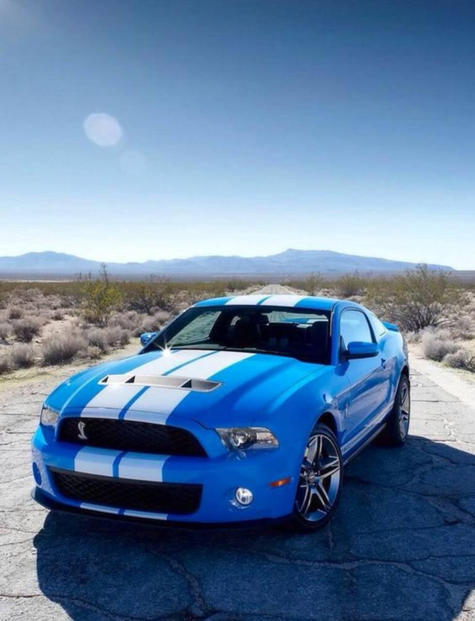 Bluewhite Mustang