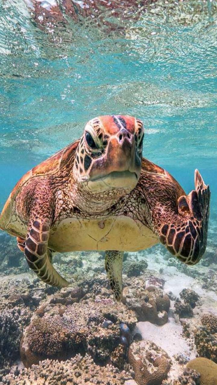 Coral guard