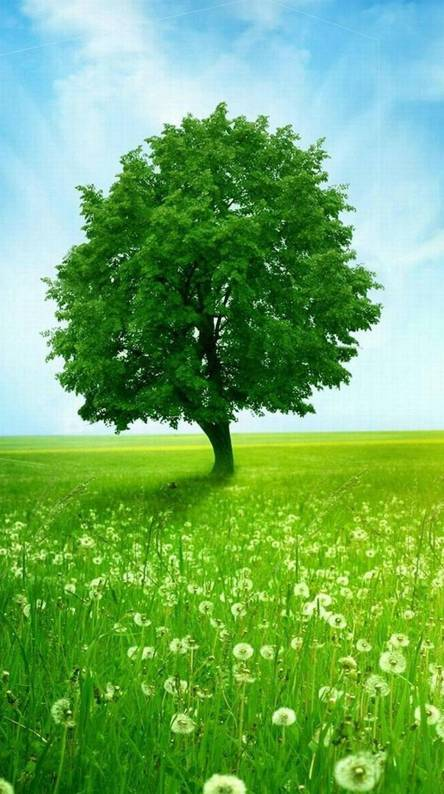Green Nature Wallpapers Free By Zedge