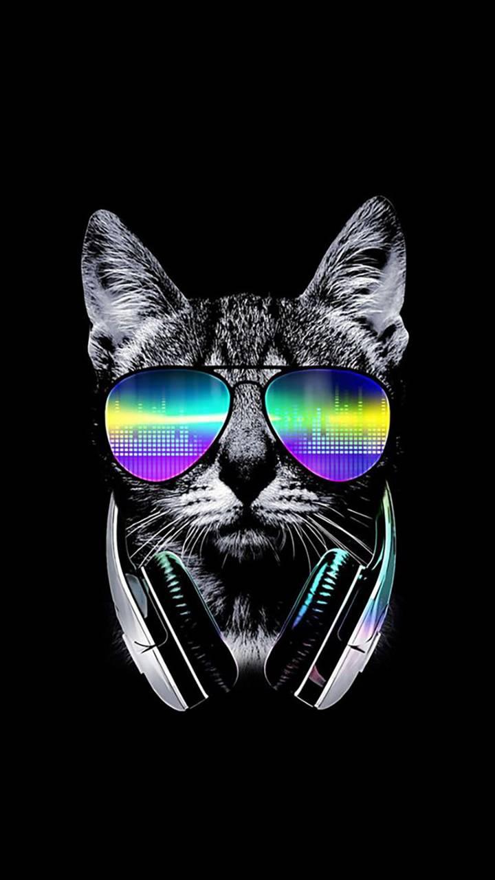 Rich kat