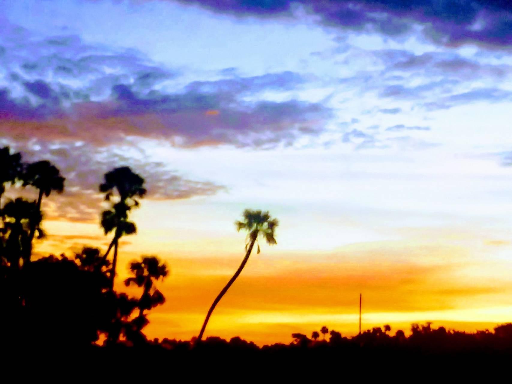 Great Palms