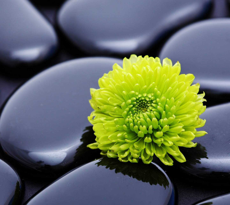 Flower-stones