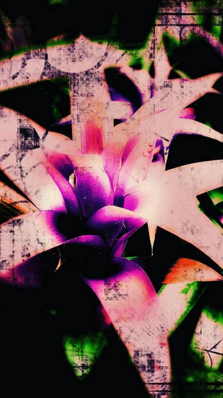 Filter and flowers