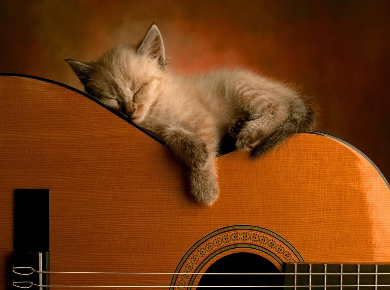 Cat Sleeping On Guit