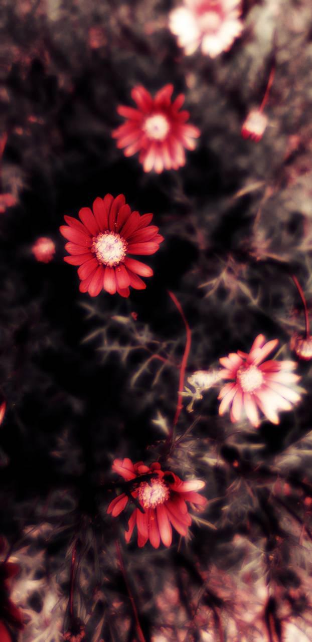 Infra flowers