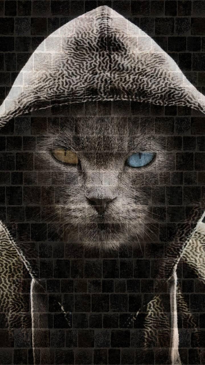 Hoodie cat